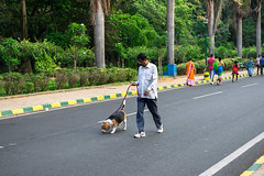 Si tu veux, ça va arriver. (- Ali Rankouhi) Tags: india cubbon park morning exercise sports people dog friend lady man spring green walk running پارک هند 1395 عید سفر کارناتاکا بنگلور ورزش صبح matin parc gens vert утро парк люди виды спорта зеленый индия бангалор morgen menschen sport grün indien bangalore صباح منتزه الناس رياضات أخضر الهند بنغالور дерево شجرة baum