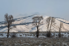 Family (jpeder55) Tags: jackson xt2 cold fujifilm grandtetonnationalpark jpedersenphotography landscape nature winter wyoming