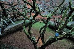 NATURALEZA (ameliapardo) Tags: arboles hojas musgo jardin parque naturaleza airelibre