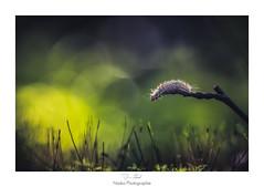 Vision sur un nouveau monde (Naska Photographie) Tags: naska photographie photo photographe paysage proxy proxyphoto chenille extérieur nature sauvage forest foret landscape bokeh color couleur