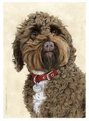 "Kenobi Dog Portrait001 • <a style=""font-size:0.8em;"" href=""http://www.flickr.com/photos/64357681@N04/32106123950/"" target=""_blank"">View on Flickr</a>"