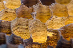 Wasps' nest (Spannarama) Tags: waspnest waspsnest honeycomb hexagons hexagonal glowing backlit golden macro closeup