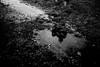 Waiting for snow in the rain... (l1ze) Tags: blackwhite blackandwhite canon canoneos5dmkii dk danmark denmark monocrome odsherred sanddobberne sjælland winter zealand blackandwhitephoto blackandwhitephotos bw l1ze lennartjoern rain
