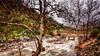 Three Rivers Rain (Calpastor) Tags: outdoor tree plant river water bridge rain california travel sequoia national park three rivers mountains landscape riverscape nature rees hills current visalia tulare romance hiking creek storm winter
