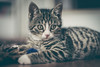"""Luna"" (// chrocoflo) Tags: sony alpha emount a7 ilce7 ilce7m animal cat kitten germany europe sel55f18z zeiss"