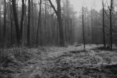 *** (pszcz9) Tags: polska poland przyroda nature natura las forest forestimages drzewo tree mgła fog zima winter grudzień december pejzaż landscape beautifulearth sony a77 bw blackandwhite monochrome czarnobiałe ścieżka path