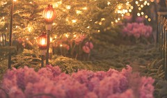 Fairy path (sonia.sanre) Tags: bokeh fairy path magic magical night lights luces noche pink flowers flower flores