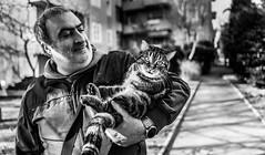 Frank & Molly (voxpepoli) Tags: frankdurellidj friendships cat forlì emiliaromagna italy it