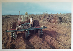 013_8676 Chimgamwe (Andrew Wilson 70) Tags: zimbabwe rhodesia farmingrhodesia johnwilsonzimbabwe farmingzimbabwe andrewwilsonzimbabwe andrewwilsonrhodesia farming agriculture inyanga inyangazimbabwe nyanga mountains africa farmingafrica commercialfarming seedpotatoes potatoes clearing burn burning fieldclearing plough ploughing