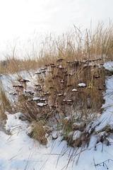 P2120136 (jjs-51) Tags: wijkaanzee sneeuw winter