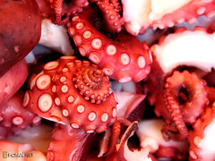 Octopus  (DigiPub) Tags: food octopus seafood onsale tentacle gettyimages    japanesecuisine