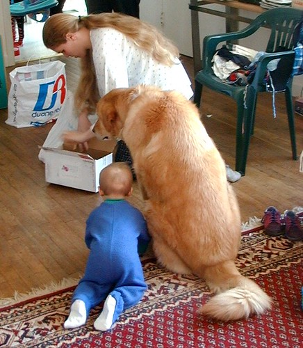 A 20 Pound Baby and 100 Pound Dog Watch Woman Giving CPR to a Box par nosha