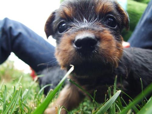 A Curious Puppy