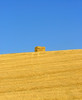 Solo al sole! (preju_13) Tags: people by italian blu giallo national tuscany campo toscana geographic grano fieno ngi collesalvetti aplusphoto