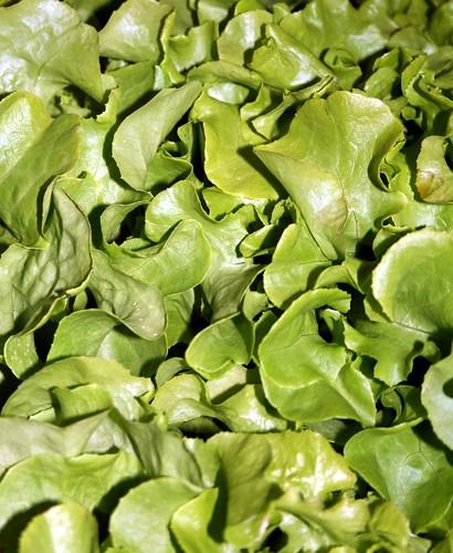 Giardino Cosa Piantare A Febbraio: Settembre Cosa Piantare E Raccogliere Nel Giardino