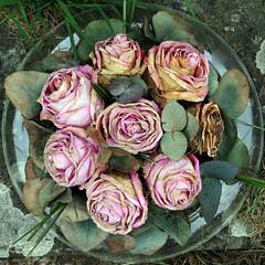 flowers (Leo Reynolds) Tags: flower canon eos 350d iso400 squaredcircle f11 65mm 0ev 0013sec hpexif sqrandom xsquarex sqset010 xleol30x xratio1x1x xxx2006xxx