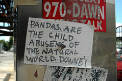 DSC_7643 (aboutmattlaw) Tags: nycpb gothamist pandas downey