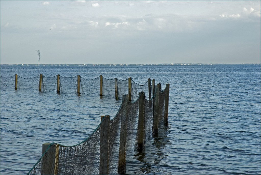swim nets on Long Island