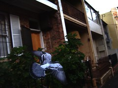 Low flying (Lachlan Hardy) Tags: motion manipulated flying pigeons sydney australia nsw surryhills levels myhood obsessed pc2010 auspctagged 20060625 maybealittle