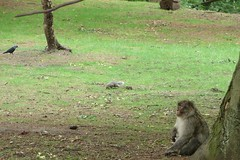 Monkey, squirrel and bird (Vlad the Impala) Tags: bird monkey squirrel macaque macaques barbarymacaque