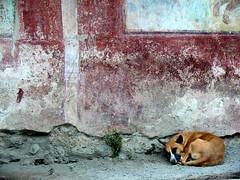 sleeping pompeii (heavenuphere) Tags: world sleeping italy dog heritage site italia campania unesco pompeii pompei