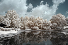 Ethereal Reflections (RtOaNn) Tags: park ir singapore surrealism surreal infrared bishan bishanpark 4aces nikonstunninggallery xgf02 x0201 x0202 x0203 x0204 x0205