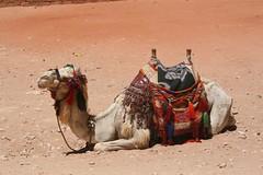 Petra, Jordan (TwoCrabs) Tags: june ruins desert petra treasury middleeast 2006 jordan camels indianajones rosecity