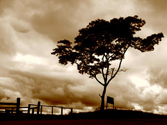 The Lonesome Tree (Igor Alecsander) Tags: brazil storm tree rain silhouette sepia clouds rural landscape arbol countryside 500v20f farm dramatic minimal campo arvore rancho lonesome valena serradabeleza