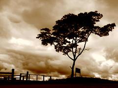 The Lonesome Tree (Igor Alecsander Fotografia) Tags: brazil storm tree rain silhouette sepia clouds rural landscape arbol countryside 500v20f farm dramatic minimal campo arvore rancho lonesome valena serradabeleza