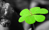 Clover (Armando Maynez) Tags: plant flower color macro verde green blancoynegro nature field topv111 méxico composition photoshop work canon mexico during df topc75 pipe ps here powershot indoors fantasy sphere athome inside piece clover arrived oeuvre opus trance within 5mp featuring inwards delusion trebol intenso dreamcastle fsftsblog ofin topvaa interestingness71 i500 5hits botopv0706 explore16jul06 abigfave appearingin takingpartin participatingin flickrchallengegroup inin myfacebook maynez inhallucination armandomaynez