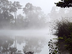Mist at NPS (craig.martell) Tags: nature monterey e1 zd 1454mm 5hits