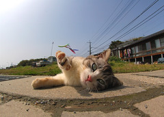 (Masakazu Ikeguchi) Tags: japan cat d70 kitty fisheye explore fukuoka straycat 100fav top20cute 1000view abigfave