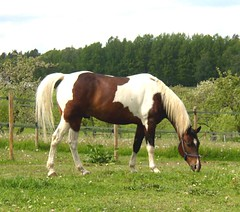 Askns farm ~ Horse (Per Ola Wiberg ~ Powi) Tags: horse 2004 nature animals niceshot sweden farm may loveit harmony sverige soe sommar musictomyeyes potofgold hst friendsforever hiddentreasure eker asknsgrd contactgroup natureplus askns 14karatgold peaceaward flickrgoldaward flickrbronzeaward flickrsilveraward worldofanimals heartawards diamondstars flickrgreen platinumheartaward wonderfulworldmix natureislife natureislovely goldstaraward photossansfrontires beautifulshot fotosconestilo worldnaturewildlifecloseup naturesphotos grouptripod vosplusbellesphotos freedomhawk panoramafotogrfico naturescreations rockinhorsecorralfriends zensationalworld diamantefotosatuestilo holycreationsofnature platinumpeaceaward thebestinfoconatureza travelsofhomerodyssey goldenplanet pegasusaward fabulousplanet naturesgreenpeaceaward natureissecondlife rhapsodicpoemsofhomerodysseus diamondnaturestyle platinumplanetevo intensosanimales pegasusbronzetrophyaward peaceandheart naturespoetry~~