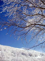 Galaverna (Conanil) Tags: italien blue schnee sky italy snow tree scale azul blauw italia blu nieve sneeuw himmel céu boom bleu ciel cielo neve árbol neige blau albero arbre árvore baum italie hemel alle italië corno galaverna