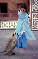 Beg For Love (gustaf wallen) Tags: india monkey 1on1peoplephotooftheday begforlove