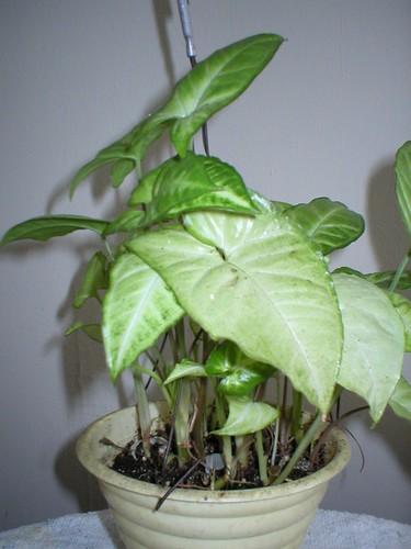 Plantes non aquatiques - Page 2 214206787_50d65555d1
