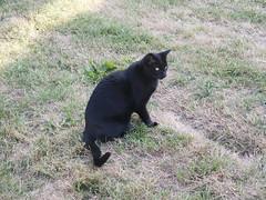 PICT0185 (wickenpedia) Tags: archaeology cat mog timeteam wicken wwwwickenarchaeologyorguk leocassandramcneir