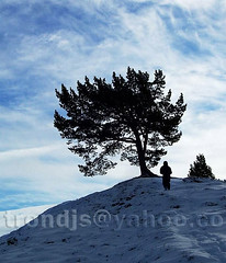 Norwegian mountain winter landscape. Tree, boy. (trondjs) Tags: blue winter boy sky snow tree nature norway clouds bravo skies blues lonelytree rondane cx7530 25faves portfolio10 trondjs
