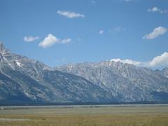AntFlats 0080 (mtthompson) Tags: jackson wyoming bison antelopeflats
