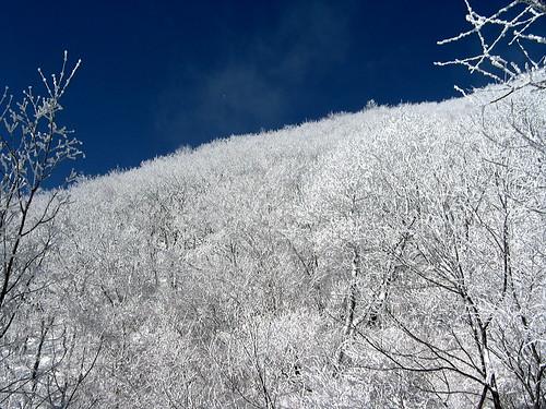 소백산 눈꽃 snowed flower of sobaeksan