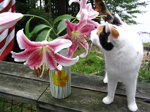 lily and the lillies