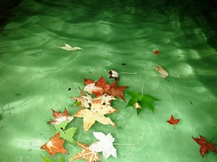 Green is my Favorite Color (mereshadow) Tags: life green fall love water leaves hope faith sorrow