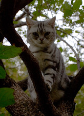 Cute cat up a tree.