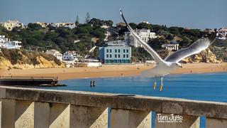 Praia do Inatel Pier, Albufeira, Portugal - 4709