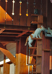 """cat_ladder • <a style=""""font-size:0.8em;"""" href=""""http://www.flickr.com/photos/97058259@N02/20622477179/"""" target=""""_blank"""">View on Flickr</a>"""