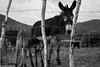 Prole (Anderson Pereira.13) Tags: rural amor burro e campo sítio jumento cerca animais filhote mãe fazenda fotojornalismo cuidado fotodocumentário