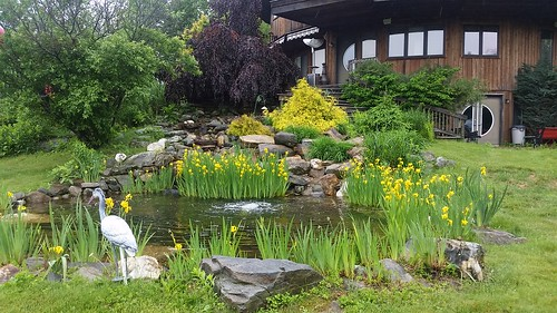 Custom 6000 gal Pond - Private Residence - CT - 1