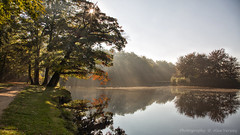 Misty tree (Alex Verweij) Tags: mist lake tree water misty canon meer boom 5d baarn alexverweij