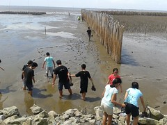 10.12.2015-AngloSingapore-BangPu-100 trees (5) (pattfoundation2014) Tags: thailand education mangrove treeplanting bangpu pattfoundation anglosingapore