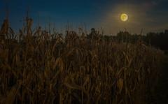 Harvest Moon (Bob G. Bell) Tags: moon fall corn farm kentucky fujifilm benton marshallcounty bobbell xpro1 harvestmon